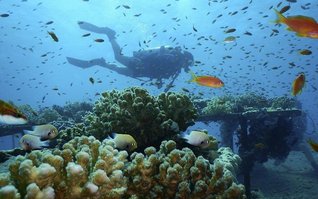 Recifes de corais do Mar Vermelho são capazes de resistir ao aquecimento global